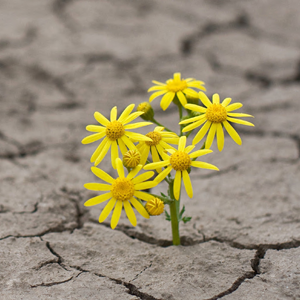 Resilience at the workplace